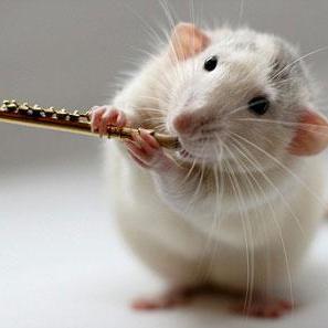 Studio Rats