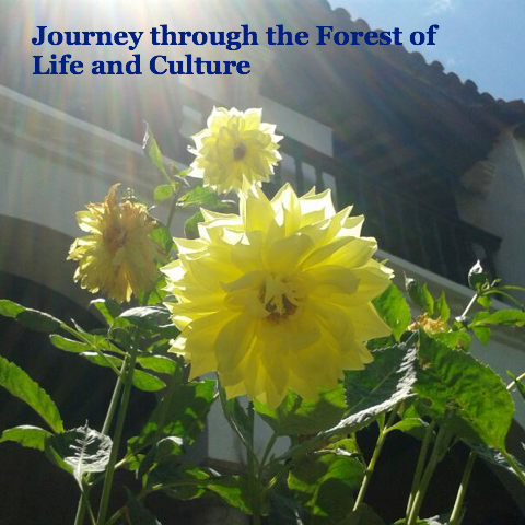 Journey through the forest of life and culture
