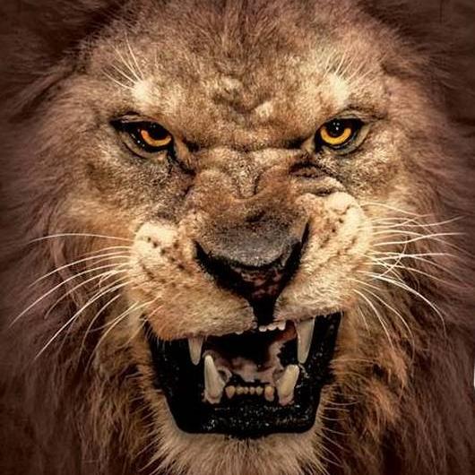 104.9 the Lion