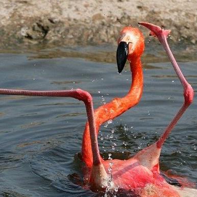 .:Flamingo:.