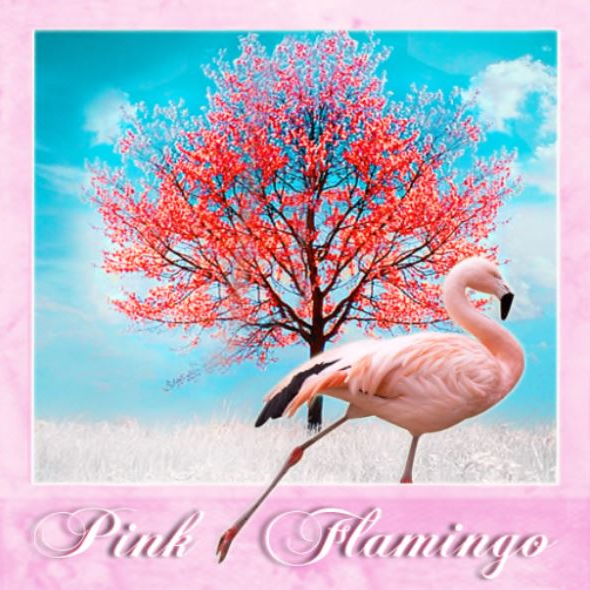 pink flamingo slow radio