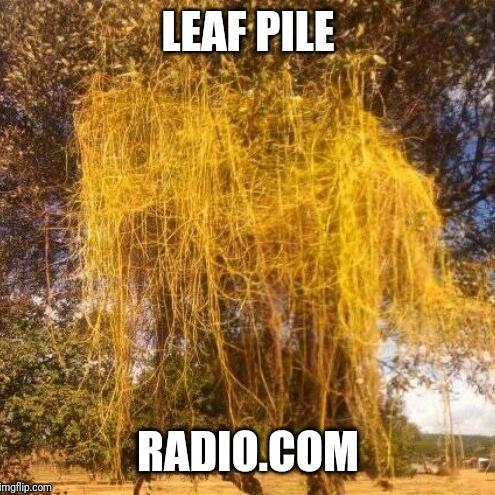 Leaf Pile Radio.com