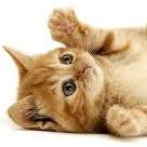 Kitty Radio Online