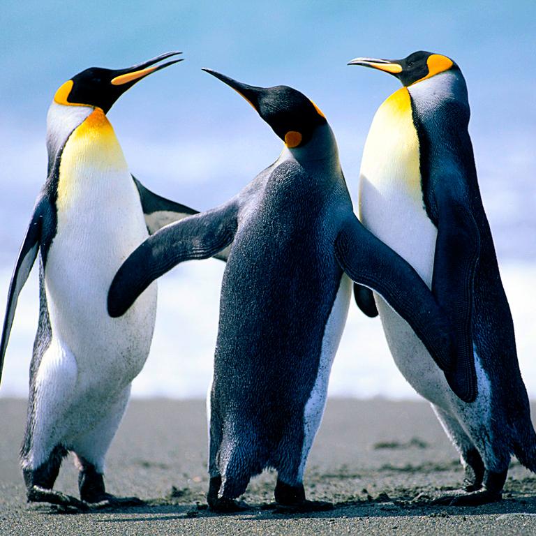 Linuxtestingradio