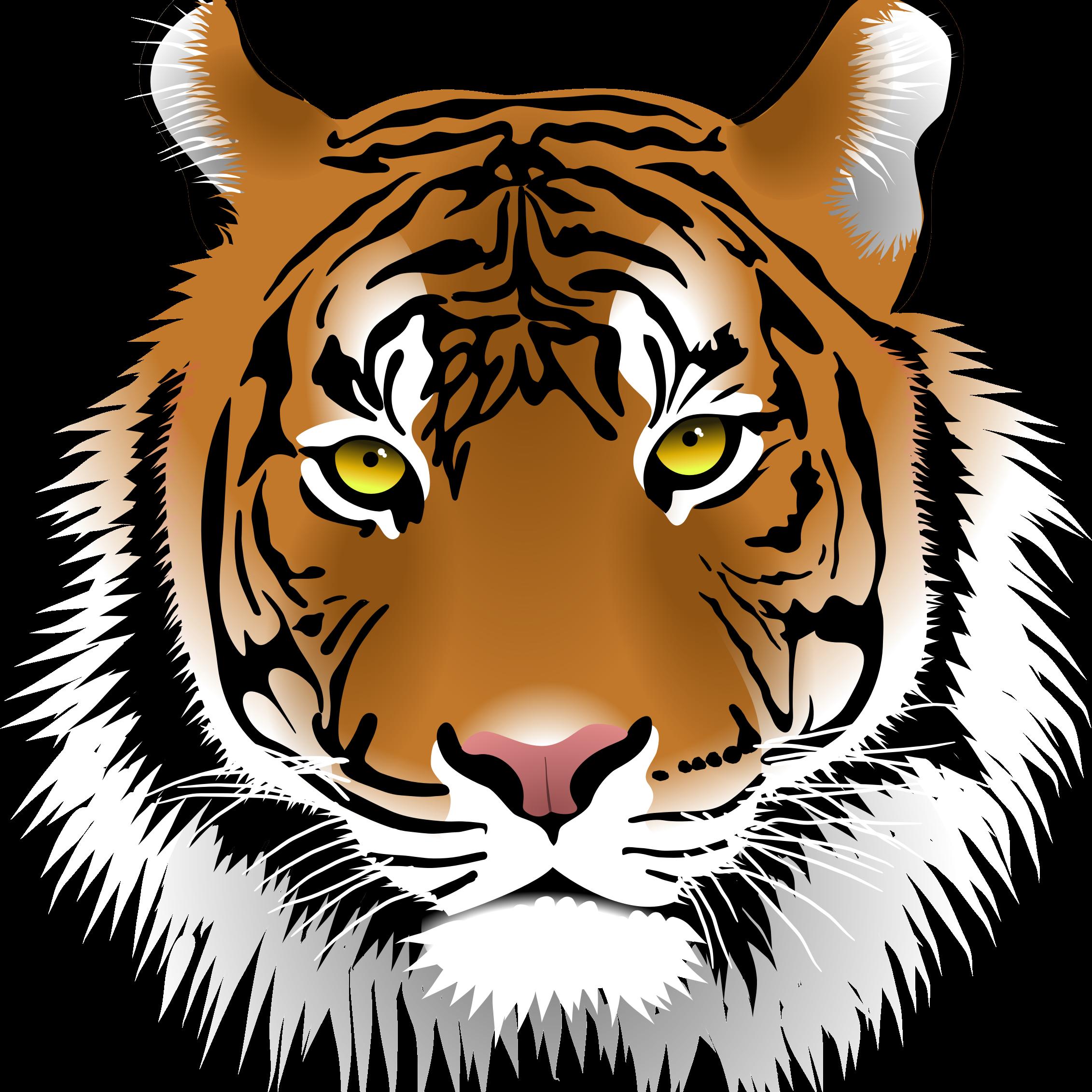 Dschungel-Tiger-Radio.de