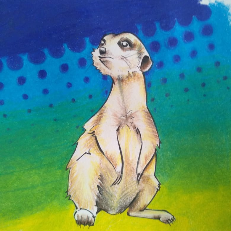 Giant Meerkat